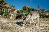 Donkey Feeding Outdoors