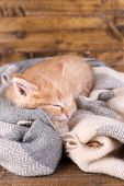 Cute little red kitten  sleeping on soft plaid, on wooden background