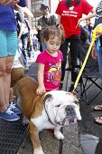 Little girl making friends with English Bulldog