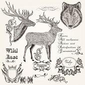 Set Of Vector Hand Drawn Animals Hunting Season Design