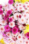 Beautiful flowers close-up