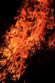 Fire and Flame Background - Hot Beauty and Sizzling Heat within Nature