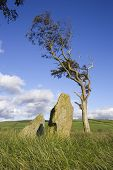 picture of bute  - Standing stones and a tree at an ancient site on Bute - JPG