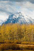 Snowcapped Mountains over Yellow Fall Leaves