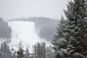 Ski Slope In The Winter Forest