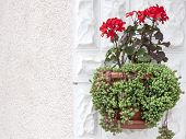 Red Flowers on the white wall