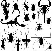 Set of Insect, lizard, spider silhouettes vector