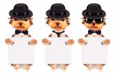 picture of mafia  - Dog dressed as mafia gangster and holding white paper banner - JPG