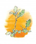branch of  oak tree against the sun, watercolor vector illustration