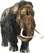 stock photo of mammoth  - Isolated image of a mammoth on white background - JPG