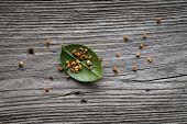 sweet osmanthus on wooden spoon