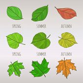 Seasonal leaf set