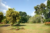 Different Kinds Of Trees In Royal Botanical Gardens, Peradeniya