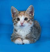 Tricolor Striped Kitten Lying On Blue