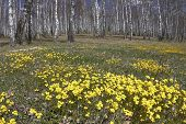 Spring landscape with yellow flowers