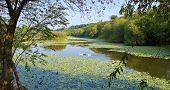 The wetland swamp