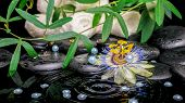 Spa Concept Of Passiflora Flower, Green  Branches, Towels, Zen Basalt Stones With Dew And Pearl Bead