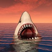 pic of great white shark  - Computer generated 3D illustration with a Great White Shark - JPG