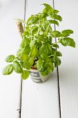image of plant pot  - Basil plant in pot with name tag - JPG