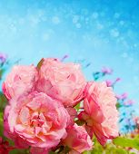 picture of blue rose  - Roses bouquet on blue background with copy space for Mother - JPG