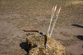 image of archery  - Archery on target in the woods in early spring - JPG