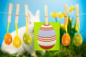 picture of easter eggs bunny  - easter eggs against white fluffy bunny sitting beside daffodils with easter eggs - JPG