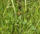 foto of dragonflies  - Summer bright Sunny day - JPG