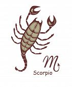 pic of scorpio  - Decorative scorpio - JPG