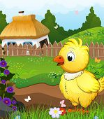 picture of farmhouse  - Little chicken on a green meadow in front of a farmhouse with a thatched roof - JPG