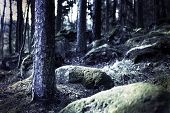 picture of creepy  - Creepy dark forest with spooky blue light - JPG