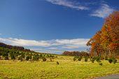 Campo de outono