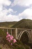 foto of bixby  - bixby bridge in big sur with flowers in foreground - JPG