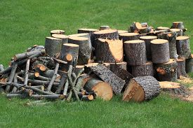 foto of cutting trees  - Cut Pine wooden logs around tree stump over green grass  - JPG