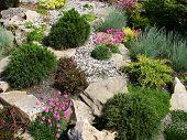 the spring of the garden