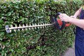 Gardener Using An Hedge Clipper In The Garden poster