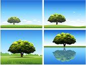 Boom natuur landschap achtergrond