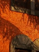 Mexican Fire Orange Wallscape No. 4
