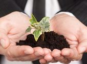 Man In A Business Suit Holding A Green Sapling