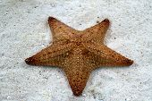 Starfish On The In The Surf