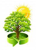 green tree oak as ecology symbol vector illustration isolated on white background