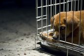 image of inhumane  - Sad looking puppy wanted to come out and play - JPG