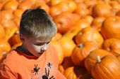 stock photo of hayride  - Boy in an orange shirt against a background of pumpkins - JPG