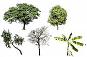 Collection Of Tree Isolated On White Background poster