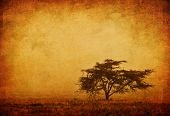 Lonely tree in the mist, grunge background, nature autumn season, african landscape in the morning, sepia toned