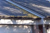 Pile Of Dried Leaves On Rain Gutter Of Residential Home In Texas, America poster