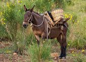 mule in the mountains, Sicily