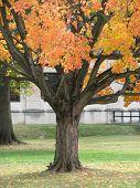 Squirrel With Orange Tree