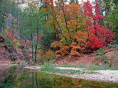 Fall Colors In West Fork Of Oak Creek, Arizona