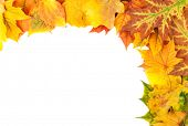 Yellow autumn leaves isolated on white background