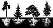 Set Of Trees With Roots, Vector Silhouette. Forest Trees, Pine, Fir-tree, Spruce, Oak poster
